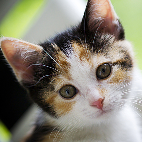 Adorable kitten looking up sweetly in the garden